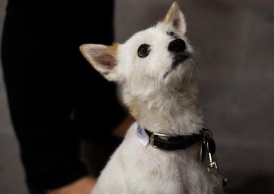 Hund Sherlock ist auch schon ganz gespannt